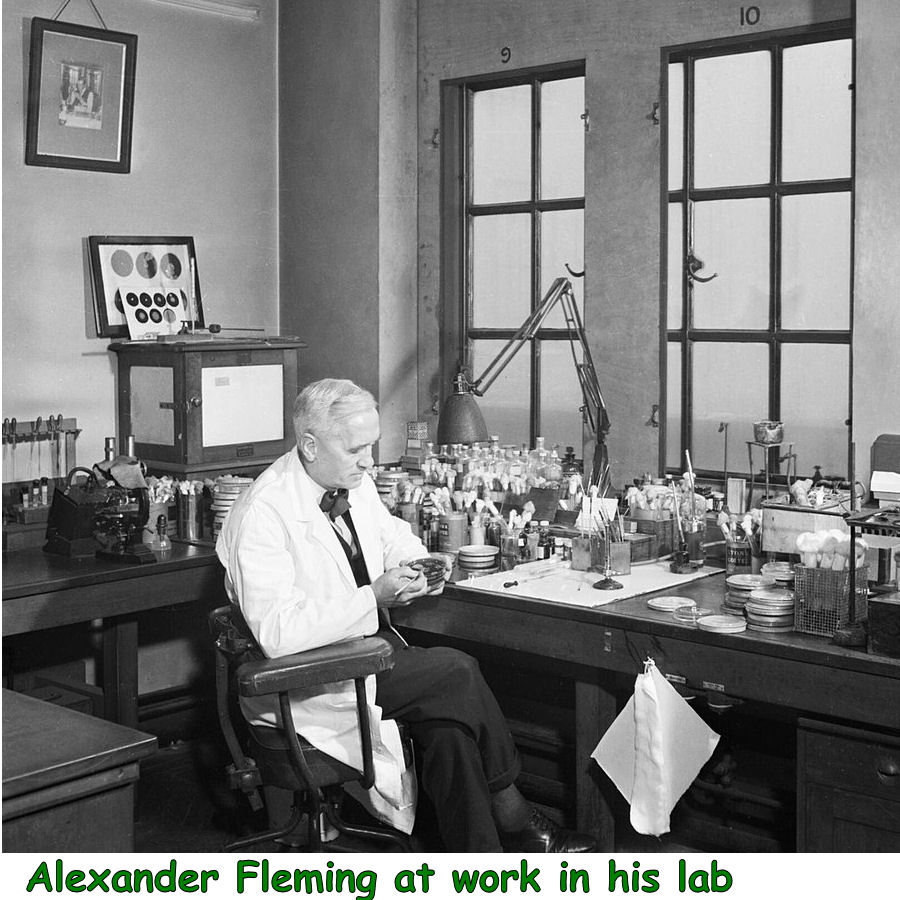 Alexander Fleming at work in his lab