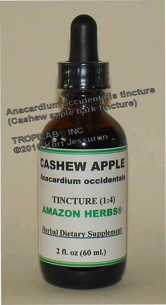 Anacardium occidentale - Cashew apple tincture, only for US$18.65 per 2 fl oz. The bark has antimicrobial and antibacterial