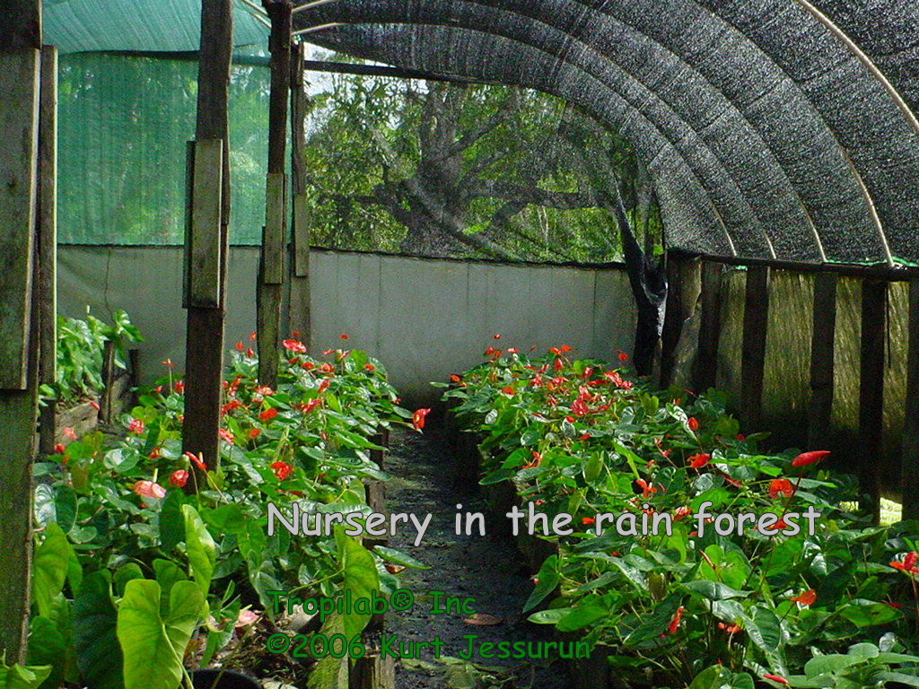 Nursery in the rain forest